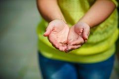 Λιβελλούλη στα χέρια Στοκ Εικόνες