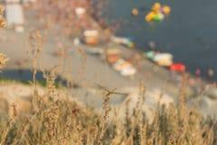 Λιβελλούλη στην ξηρά χλόη Στοκ φωτογραφία με δικαίωμα ελεύθερης χρήσης