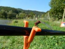 Λιβελλούλη/Anisoptera στον πόλο fishig με την πορτοκαλιά υποστήριξη Στοκ εικόνα με δικαίωμα ελεύθερης χρήσης