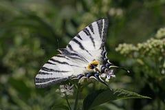 λιγοστό καλοκαίρι πετα&la Στοκ Εικόνες