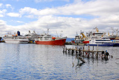 Λιμάνι Ushuaia Στοκ Εικόνες