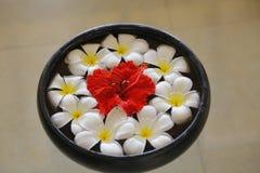 Λιμένας λουλουδιών Araliya στοκ εικόνα