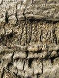 λιμένας της Βαρκελώνης vell Στοκ Φωτογραφία