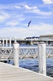 Λιμένας του Σίδνεϊ Στοκ φωτογραφία με δικαίωμα ελεύθερης χρήσης