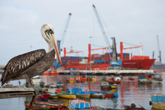 Λιμένας Arica Στοκ Φωτογραφίες