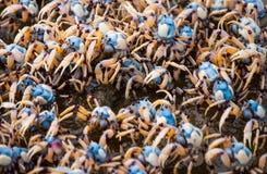 Λιμένας Macquarie Στοκ Φωτογραφίες