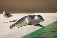 Λιμενικά σφραγίδα και seagull Στοκ Φωτογραφίες