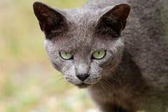 Λιμενική γάτα 3 Στοκ Φωτογραφία