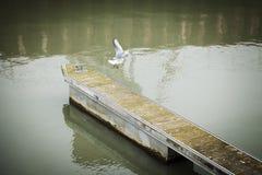 Λιμενοβραχίονας βαρκών με τον πετώντας γλάρο Στοκ Εικόνα
