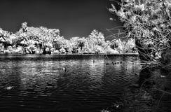 Λιμνοθάλασσα φοινικών στις υπέρυθρες ακτίνες Στοκ φωτογραφίες με δικαίωμα ελεύθερης χρήσης