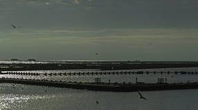 Λιμνοθάλασσα κοιλάδων Comacchio Στοκ Εικόνες