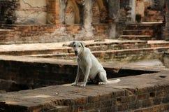 Λιμοκτονώντας περιπλανώμενο σκυλί Στοκ φωτογραφίες με δικαίωμα ελεύθερης χρήσης