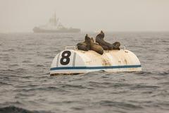 Λιοντάρια θάλασσας σε έναν σημαντήρα Στοκ φωτογραφία με δικαίωμα ελεύθερης χρήσης