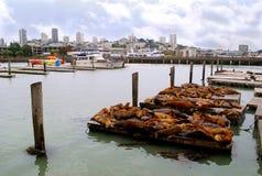 Λιοντάρια θάλασσας στοκ φωτογραφία με δικαίωμα ελεύθερης χρήσης