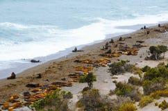 Λιοντάρια θάλασσας σε Punta Norte Στοκ εικόνα με δικαίωμα ελεύθερης χρήσης