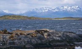 Λιοντάρια θάλασσας - Lobos del Mar Στοκ Εικόνα