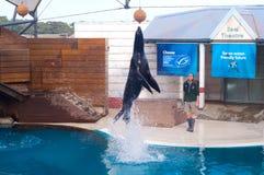 Λιοντάρι θάλασσας στο ζωολογικό κήπο στοκ εικόνα με δικαίωμα ελεύθερης χρήσης