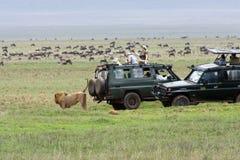 λιοντάρι κρατήρων που χαρ&al στοκ φωτογραφία