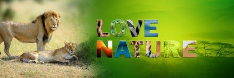 Λιοντάρι με τη φύση αγάπης κειμένων Στοκ Φωτογραφίες