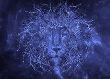 Λιοντάρι νερού. Στοκ Εικόνες