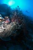 λιοντάρι ψαριών Στοκ φωτογραφία με δικαίωμα ελεύθερης χρήσης