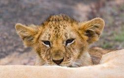 Λιονταρίνα και cub της σε έναν μεγάλο βράχο Εθνικό πάρκο Κένυα Τανζανία mara masai serengeti Στοκ Εικόνες