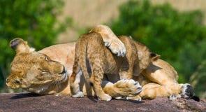 Λιονταρίνα και cub της σε έναν μεγάλο βράχο Εθνικό πάρκο Κένυα Τανζανία mara masai serengeti Στοκ Εικόνα