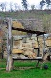 Λιονταρίνα στο ζωολογικό κήπο Στοκ εικόνα με δικαίωμα ελεύθερης χρήσης