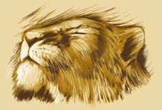 Λιονταρίνα ύπνου διανυσματική απεικόνιση