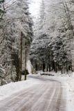 Λιπαρός χειμερινός δρόμος στο όμορφο δάσος στοκ εικόνα