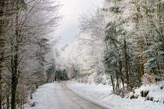 Λιπαρός χειμερινός δρόμος στο όμορφο δάσος στοκ φωτογραφίες