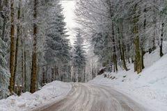 Λιπαρός χειμερινός δρόμος στο όμορφο δάσος στοκ εικόνες με δικαίωμα ελεύθερης χρήσης