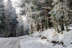 Λιπαρός χειμερινός δρόμος στο όμορφο δάσος στοκ φωτογραφίες με δικαίωμα ελεύθερης χρήσης