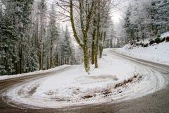 Λιπαρός χειμερινός σπειροειδής δρόμος στο όμορφο δάσος στοκ εικόνα