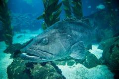 ΛΙΣΣΑΒΩΝΑ, ΠΟΡΤΟΓΑΛΙΑ - 31 Ιανουαρίου 2011: Λισσαβώνα Oceanarium Στοκ Εικόνες