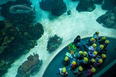 ΛΙΣΣΑΒΩΝΑ, ΠΟΡΤΟΓΑΛΙΑ - 31 Ιανουαρίου 2011: Λισσαβώνα Oceanarium Στοκ εικόνα με δικαίωμα ελεύθερης χρήσης