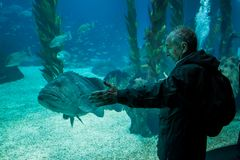 ΛΙΣΣΑΒΩΝΑ, ΠΟΡΤΟΓΑΛΙΑ - 31 Ιανουαρίου 2011: Λισσαβώνα Oceanarium Στοκ Εικόνα