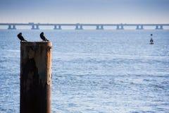 ΛΙΣΣΑΒΩΝΑ, ΠΟΡΤΟΓΑΛΙΑ - 31 Ιανουαρίου 2011: Πάρκο των εθνών, με το Β Στοκ φωτογραφία με δικαίωμα ελεύθερης χρήσης