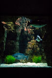 Λισσαβώνα Oceanarium - κεντρική δεξαμενή, μια από τις πολλές απόψεις Στοκ Φωτογραφία