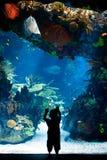 Λισσαβώνα Oceanarium - παιδί που κοιτάζει επίμονα στην όμορφη κεντρική δεξαμενή Στοκ Εικόνες