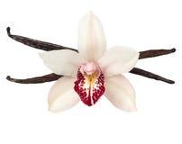 Λοβοί βανίλιας και κεφάλι λουλουδιών ορχιδεών που απομονώνεται στο λευκό Στοκ εικόνα με δικαίωμα ελεύθερης χρήσης