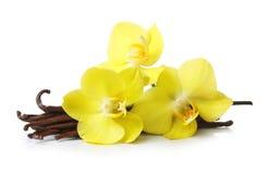 Λοβοί βανίλιας και λουλούδια ορχιδεών που απομονώνονται στοκ φωτογραφίες με δικαίωμα ελεύθερης χρήσης