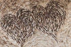 Λοβός καρδιών Στοκ Εικόνα