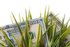 Λογαριασμοί εκατό δολαρίων μεταξύ της πράσινης χλόης σε ένα άσπρο υπόβαθρο στοκ εικόνες με δικαίωμα ελεύθερης χρήσης