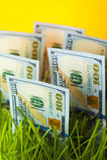 Λογαριασμοί εκατό δολαρίων στην πράσινη χλόη Στοκ Εικόνες