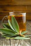 Λογικά τσάι και φύλλα Στοκ Φωτογραφία