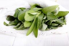 Λογικά φύλλα στο λευκό στοκ φωτογραφία με δικαίωμα ελεύθερης χρήσης