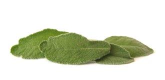 Λογικά φύλλα Στοκ Εικόνες