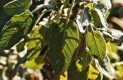 Λογικά φύλλα στοκ εικόνα