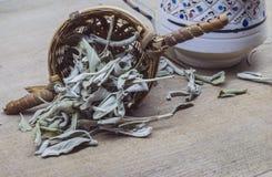 Λογικά φύλλα τσαγιού Στοκ Φωτογραφίες